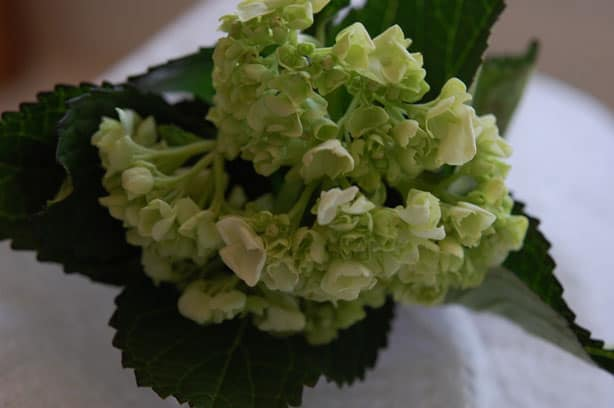 How to Revive Your Wedding Flowers If They Are Starting to Droop