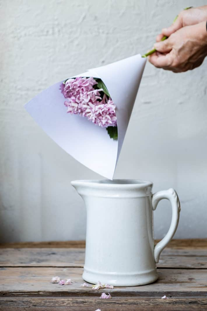 A piece of white paper wrapped in a cone around a pink hydrangea bloom to protect it from a hot water treatment.