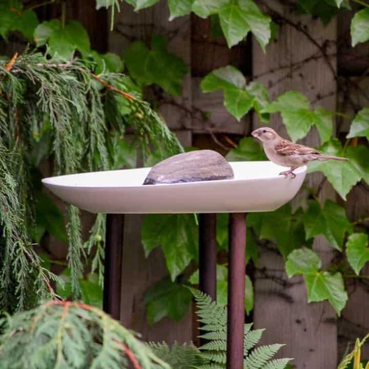 DIY Modern Birdbath.
