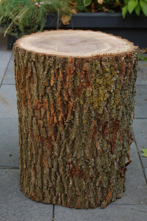 Stumped How To Make A Tree Stump Table on Stools Made From Logs