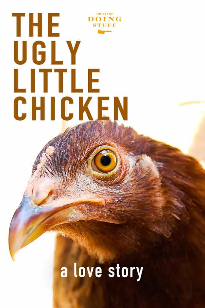 The Ugly Little Chicken<br></noscript>A Love Story