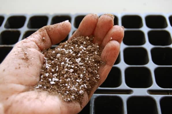 A palmful of soillless mix, a combination of peat, perlite and bark.