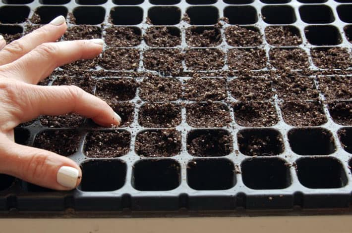 Using a finger, soil is compressed a little bit into seed starting trays to provide stability to seedlings.