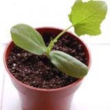 Growing Vegetable Seedlings <br /> Part II