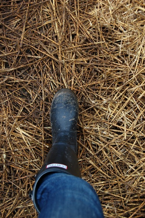 "It's been raining for 23 months in Ontario so the field was extremely muddy.  Everyone was wearing rubber boots and half of those were Hunter's.  Watch for my post on ""The Rubber Boots of Christie's"" on Friday."