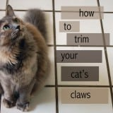 Kitten's Got Claws.<br>How to Trim Your Cat's Claws