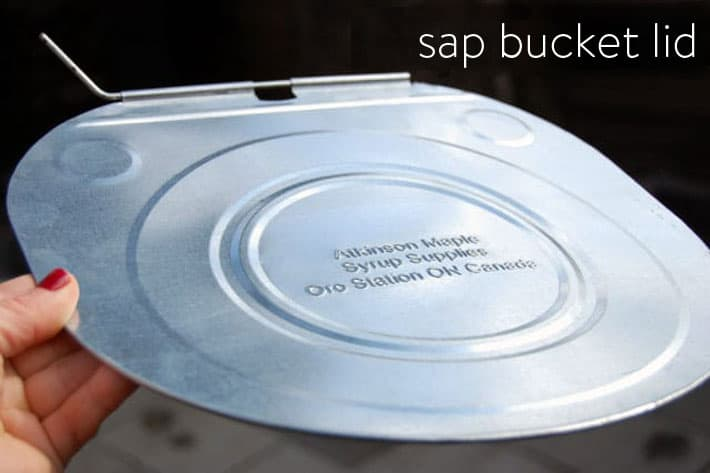 Sap bucket lid used for keeping debris out of the sap while it's collecting.