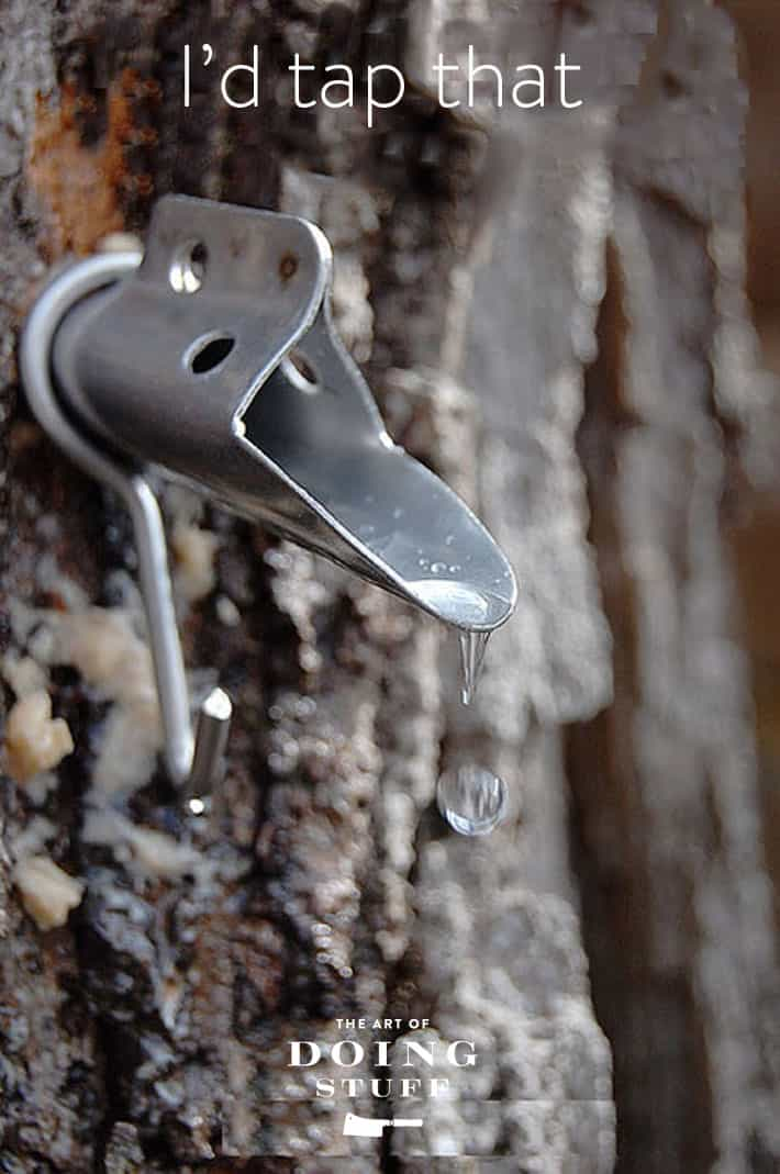 Beautiful shot of a single drop of sap falling out of a maple tree tap captured in mid air.