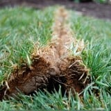 How to Lay Sod. A Step by Step Guide to the Perfect Lawn.