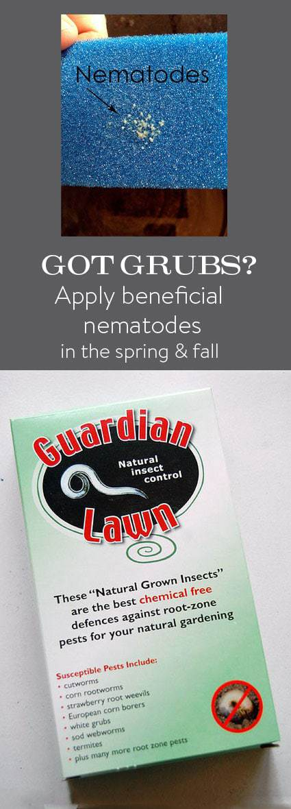 how to get rid of nematodes in florida soil