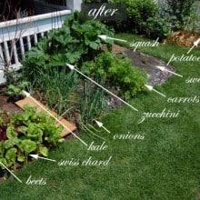 August · Front Yard Vegetable Garden!