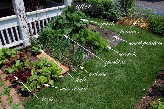 front yard vegetable garden one month update