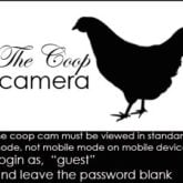 The Coop Cam Day 5!<br>Free for all.