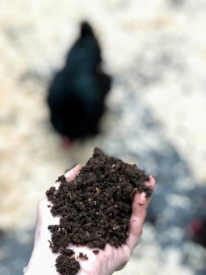 Beautifully broken down compost that looks just like soil being held in a hand outside, with a chicken in the background.