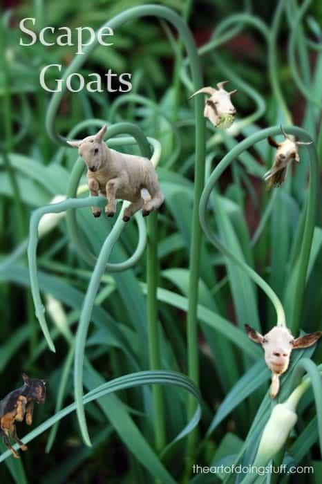 scape-goat2