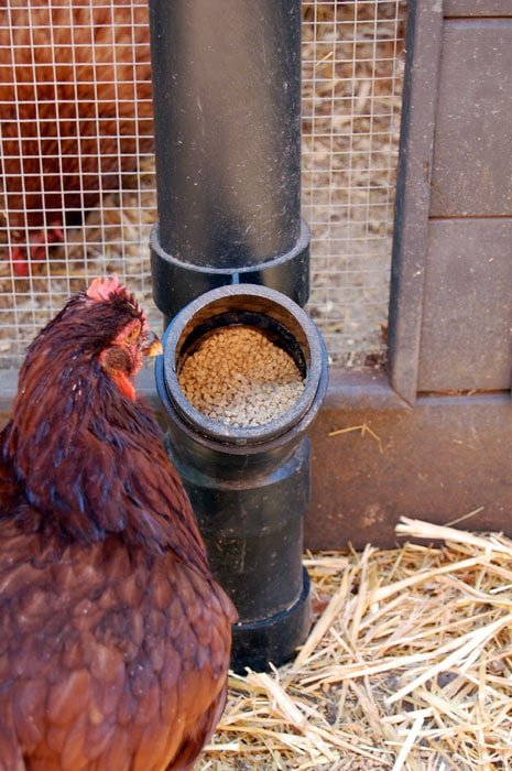 The Best Chicken Feeder In The World The Art Of Doing Stuff