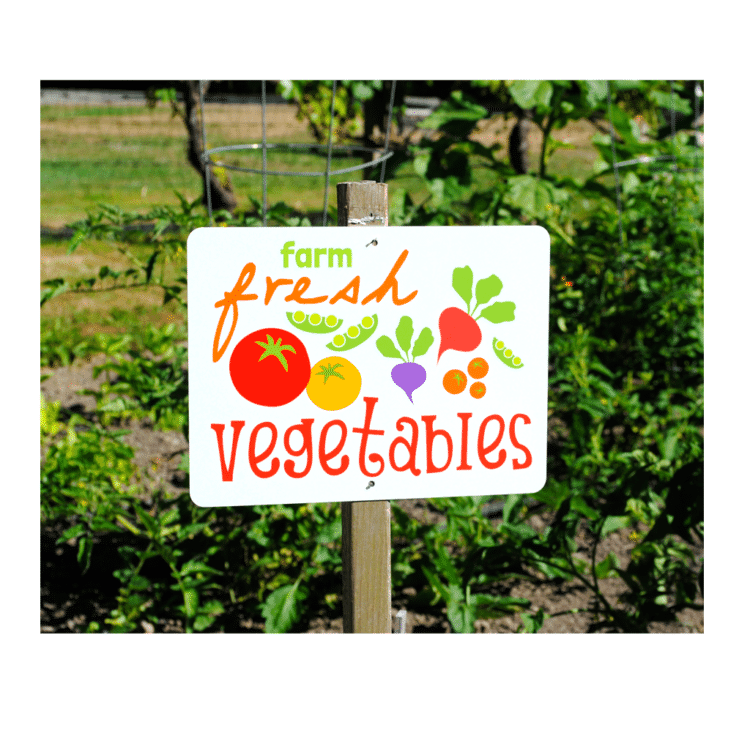 FarmFreshVegetables_9x12_white