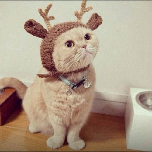 cat-wearing-a-reindeer-hat1
