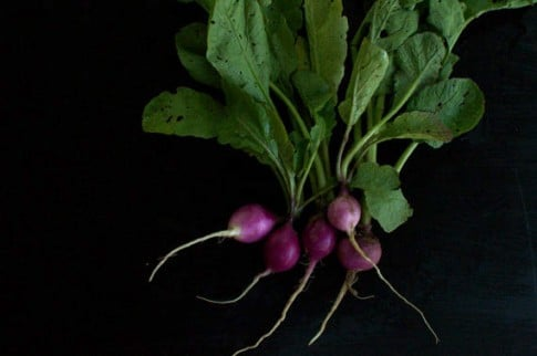 purple-radish