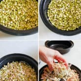 How to Grow Bean Sprouts (DIY)
