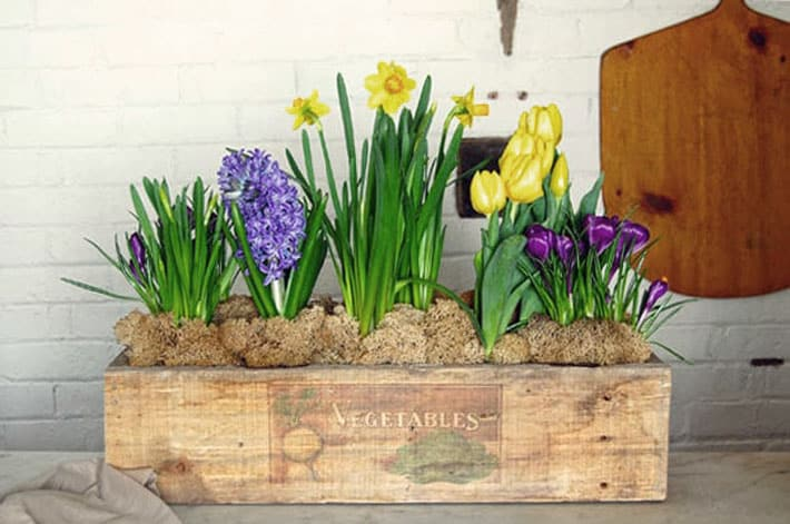 Rustic planter box with image of vegetables printed on the wood.
