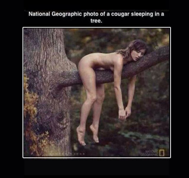 cougar-in-a-tree