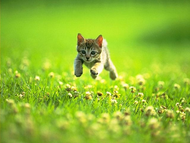 kitten-in-meadow