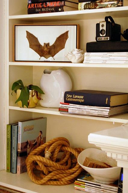 Bat in bookcase