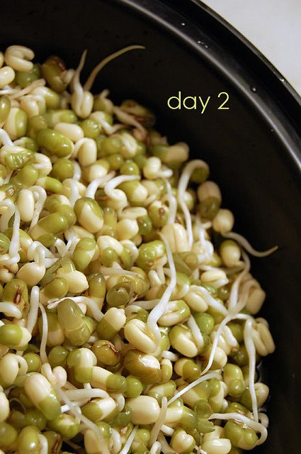 Bean Sprouts 12