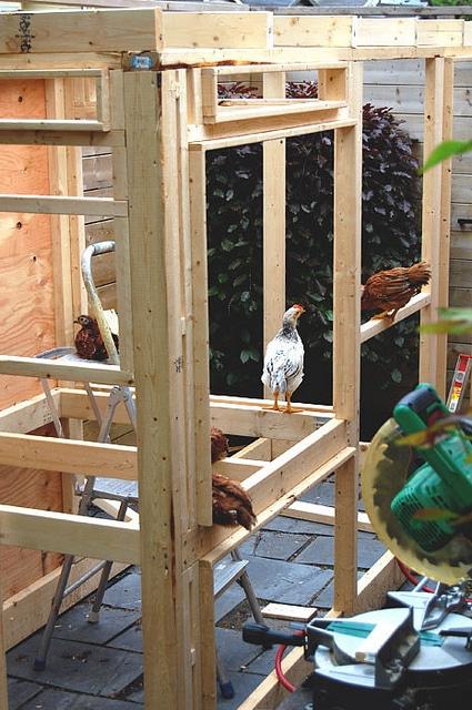 Building Coop 3