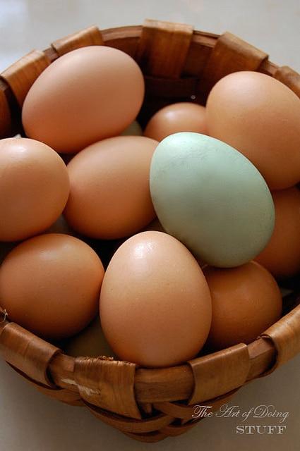 Cheeze Whiz Egg Final
