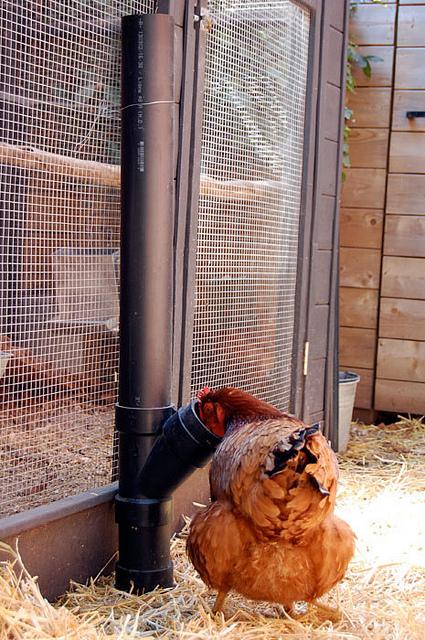 Chicken Feeder 5