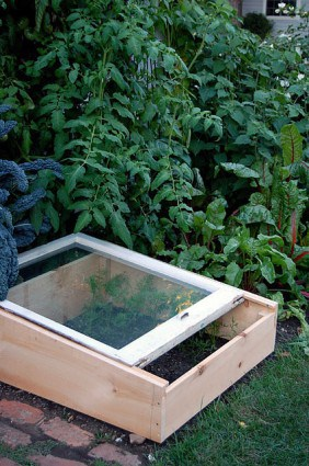 Cold Frame In Garden 2