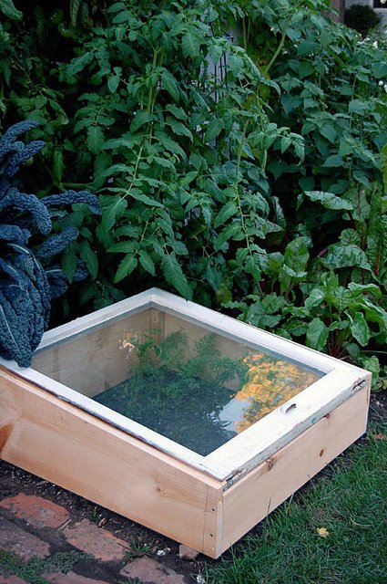 Cold Frame In Garden