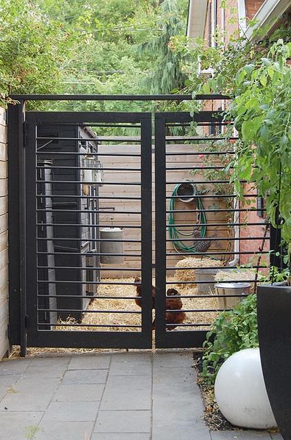 Coop Gates 2