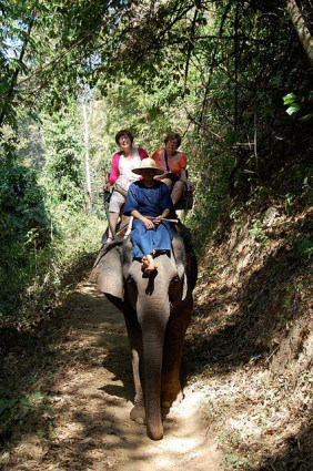 Elephant Ride Before