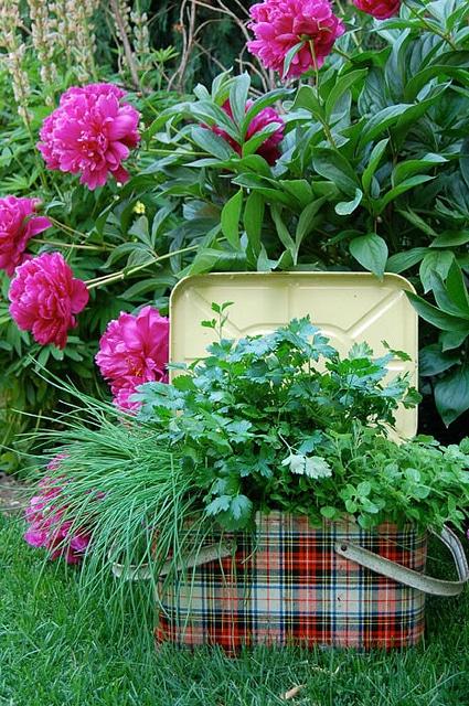Herbs In Picnic Basket