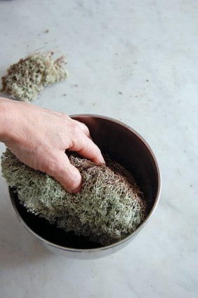 How To Preserve Moss 5