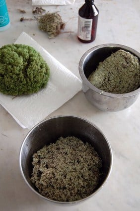 How To Preserve Moss 6