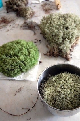 How To Preserve Moss 8