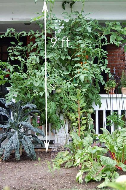 July Garden 13