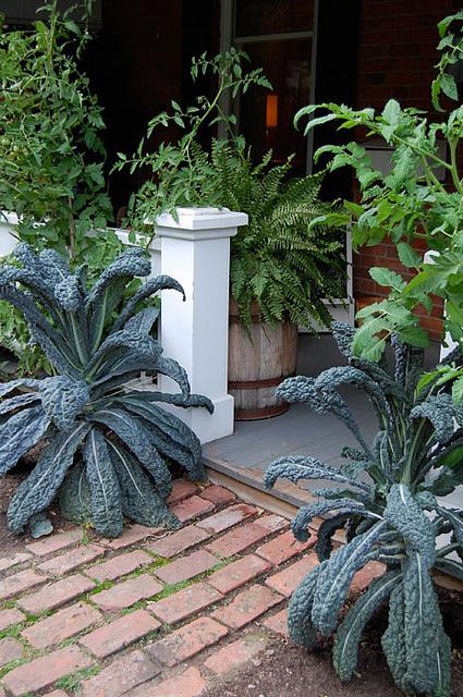 July Garden 14