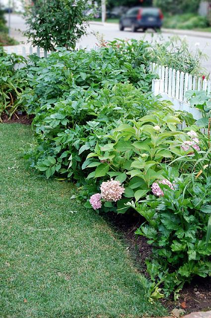 July Garden 20