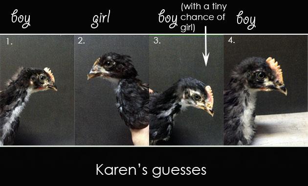 Karen's-guesses