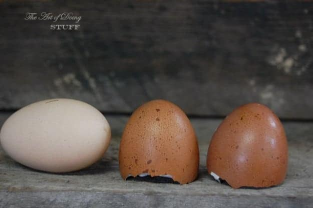 Marans Eggs 18