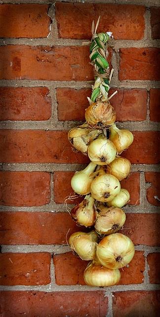 Onions Braided