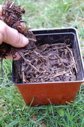 Testing Compost