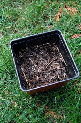 Testing Compost 3