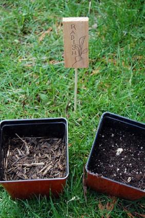 Testing Compost 5