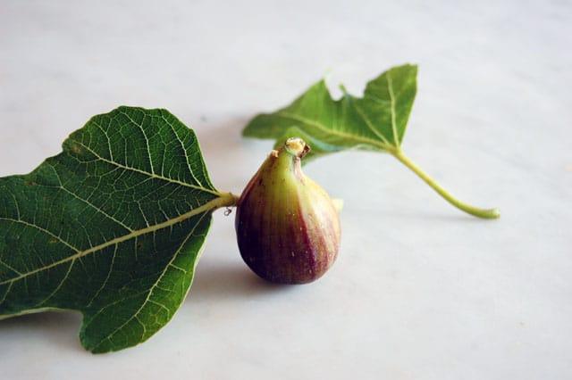 Tiny Fig